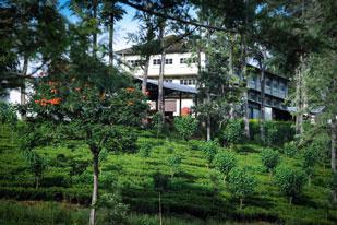 Maha Eliya Estate Calsay