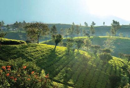 Choosing Good Tea Needs Care