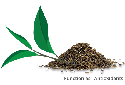What makes tea a healthy beverage?