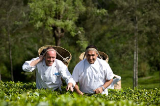 Chefs and the tea maker slider image 2
